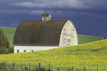 NA, USA, Idaho, south of Genesse Canola field and old white barn von Danita Delimont