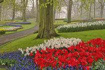 Tulips and daffodils, Keukenhof Gardens, Lisse, Netherlands by Danita Delimont