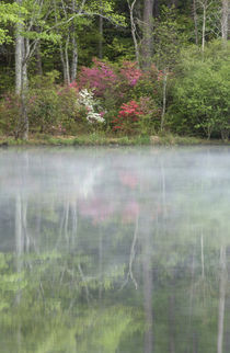 Azaleas relfecting in a pond during early morning, Georgia, USA by Danita Delimont