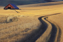 NA, USA, Idaho, south of Moscow Roadway through wheat to barn von Danita Delimont