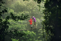 Tourists on canopy walkway, Monteverde Cloud Forest Preserve, Costa Rica by Danita Delimont