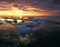 Canada, Yukon, Ivvavik NP, Summer pack ice at sunset on the Arctic Ocean von Danita Delimont