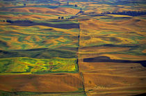 The Palouse from Steptoe Butte, Colfax, Washington, US von Danita Delimont