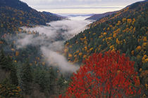Autumn view of fog from Morton Overlook von Danita Delimont