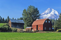 Red Barn in the Hood Valley with Mt Hood in Oregon von Danita Delimont