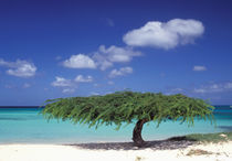 Caribbean, Aruba. Eagle Beach by Danita Delimont