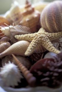 Shellfish details von Danita Delimont