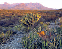 USA, Texas, Big Bend NP von Danita Delimont