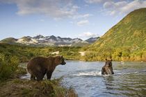 Grizzly Bear Sow and Cub, Katmai National Park, Alaska von Danita Delimont