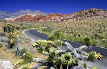 Red Rock Canyon National Conservation Area, Las Vegas, Nevada, USA von Danita Delimont