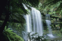 Tasmania, Mt. Field National Park, Russell Falls and tree ferns. by Danita Delimont