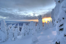Snowghosts at sunset at Whitefish Mountain Resort in Montana von Danita Delimont