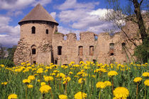 Dandelions surround Cesis Castle in central Latvia. von Danita Delimont