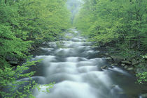 NA, USA, Tennessee, Great Smoky Mountains NP Little River, Tremont area by Danita Delimont