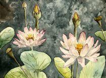 lotus flower by Derek McCrea