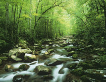 USA, North Carolina, Great Smoky Mountains National Park by Danita Delimont