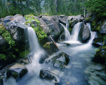 Paradise Creek flows down the slopes of Mount Rainier by Danita Delimont