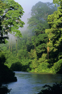 River in lowland rainforest, Danum Valley, Sabah, Borneo by Danita Delimont