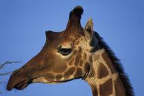 Africa, Kenya, Samburu National Reserve by Danita Delimont