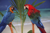 North America, USA, Hawaii. Parrots on palm von Danita Delimont