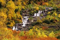 Waterfall below Mt Cannon in Glacier National Park in Montana von Danita Delimont