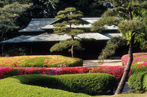 Asia, Japan, Tokyo. Azaleas at the Imperial Palace East Gardens. Credit as by Danita Delimont