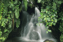 Ecuador, Andes, Cayambe-Coca Nature Reserve, 1400m, small rainforest stream. by Danita Delimont