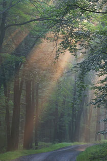 USA, Pennsylvania, Light rays streaming through a forest along a narrow road by Danita Delimont