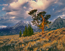 USA, Wyoming, Grand Teton NP by Danita Delimont