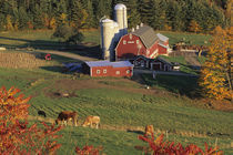 North America, USA, Vermont, Pomfret. Red Barn and fall foliage von Danita Delimont