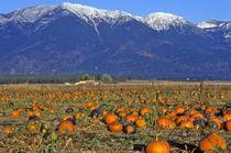 Flathead Valley Montana Pumpkin patch von Danita Delimont