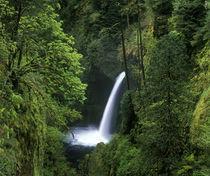 Metlako Falls in the Columbia Gorge of Oregon by Danita Delimont