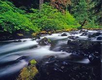 Sol duc Creek flows through Olympic National Park in Washington von Danita Delimont