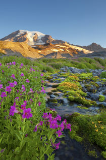 USA, Mt. Rainier National Park by Danita Delimont