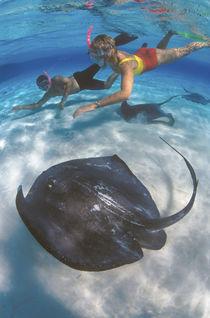 Stingray City, Grand Cayman, Cayman Islands, Caribbean.MR by Danita Delimont