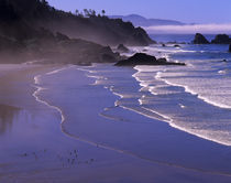 OR, Oregon Coast, Ecola SP, Indian Beach with fog von Danita Delimont