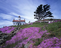 Crescent City, Battery Point lighthouse with ice plant in bloom von Danita Delimont