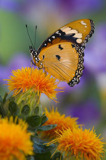 Sammamish Washington Tropical Butterflies by Danita Delimont