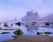 WA, Olympic National Park, Second Beach, tidepools and seastacks by Danita Delimont