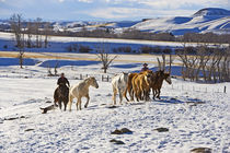 Cowboys with horses on the range on The Hideout Ranch in Shell Wyoming by Danita Delimont