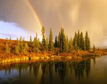 USA, Alaska, Denali NP von Danita Delimont