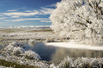 Frozen Pond and Hoar Frost on Willow Tree, near Omakau, and Hawkdun Ranges by Danita Delimont