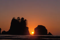 Sunset at Point of the Arches along the Pacific coast, Washington by Danita Delimont