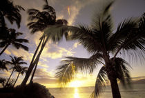 USA, Hawaii, Maui, Kihei Beach Sunset and palm tree by Danita Delimont