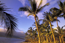 USA, Hawaii, Maui, Kihei Beach Evening light on beach and palms by Danita Delimont