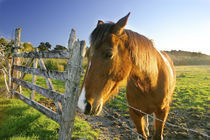 Haast, New Zealand. A horse ranch in New Zealands south Island. von Danita Delimont
