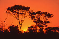 South Africa.  African sunset. von Danita Delimont