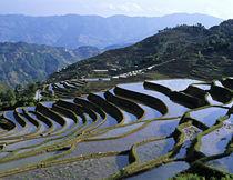 Asia, China, Yunnan von Danita Delimont