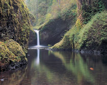 Punch Bowl Falls, Eagle Creek, Columbia River Gorge, Oregon von Danita Delimont