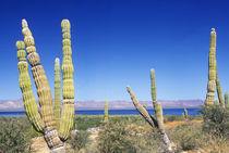 Mexico, Baja California Sur, Mulege von Danita Delimont